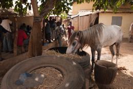 Africa;Benin;Horses;Kaleidos;Kaleidos-images;Man;Men;Tarek-Charara