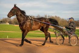 Domaine-de-Grosbois;Drivers;French-Trotters;Grosbois;Harness-racing;Horse;Horses;Kaleidos;Kaleidos-images;Marolles-en-Brie;Sulkies;Sulky;Tarek-Charara;Trot;Trotters;Trotting;Jean-Michel-Bazire;Bazire