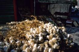 alho;aglio;ajo;Knoblauch;garlic;aïl