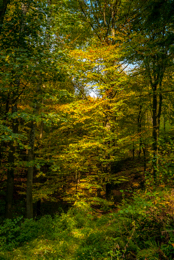 Autumn;Colors;Colours;Forests;Kaleidos;Kaleidos-images;Landscapes;Leaves;Tarek-Charara