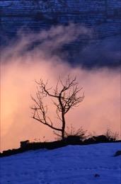 Al Arz - The Cedars